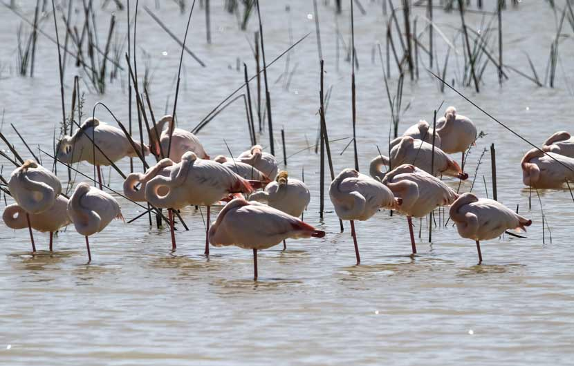 Flamingos Donana Park