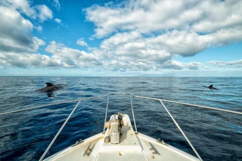 Dolphin Watching Spain