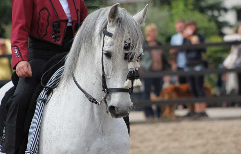 Equestrian School in Jerez de la Frontera