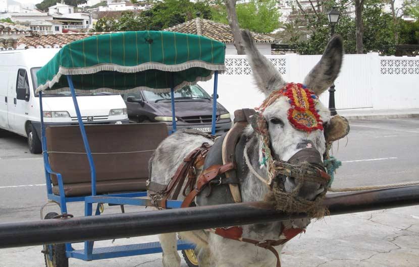 Mijas Donkey Taxi
