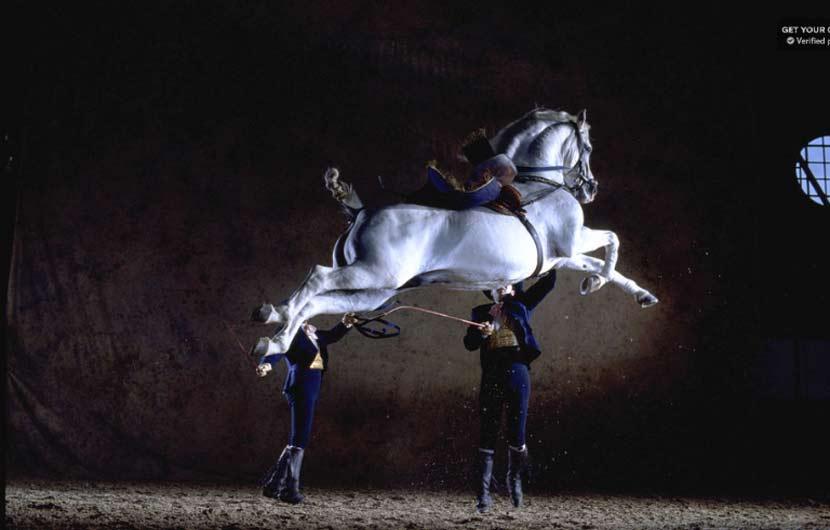 Andalucian Horse Dance Jerez